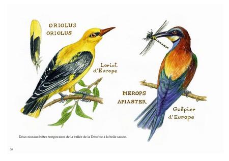 Page 50 : faune et flore constituent une part importante de l'ouvrage. Leur approche permet de comprendre la beauté et l'harmonie des équilibres naturels qui relèvent de l'environnement du gouffre.